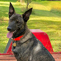 WI K9 SOS Image of files/Dog_Image/cindy_guinness.jpg